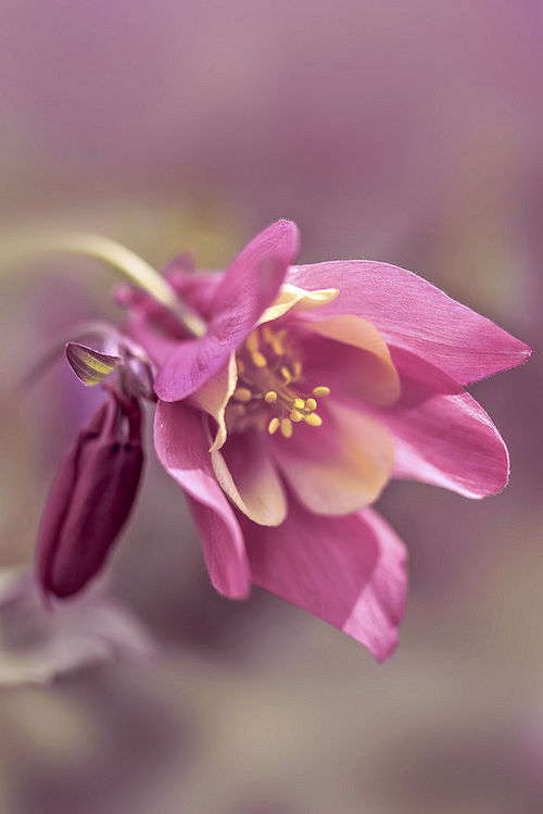 spring, macro and flower