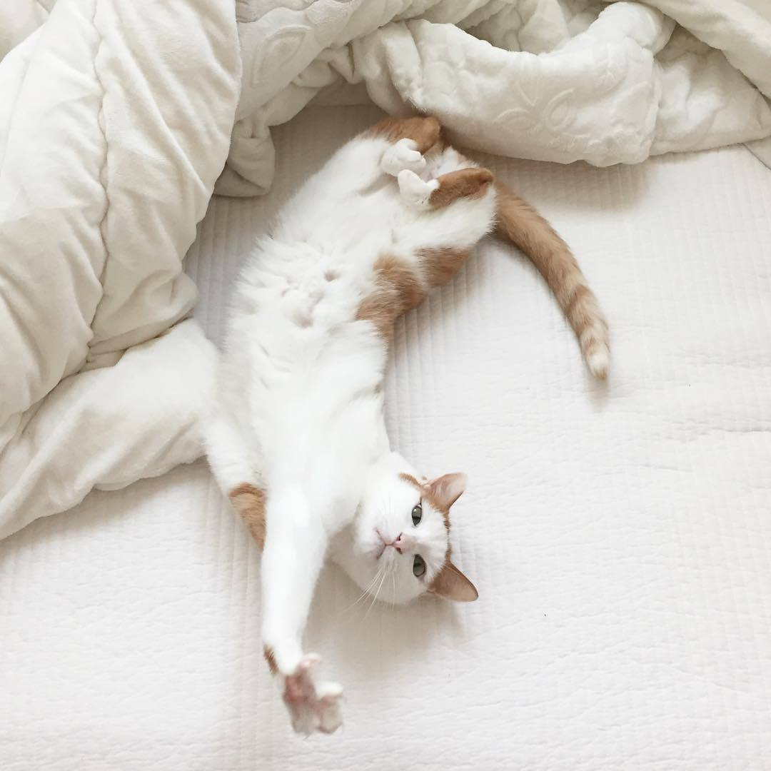 ginger cat, white cat, neutral aesthetic and white neutral