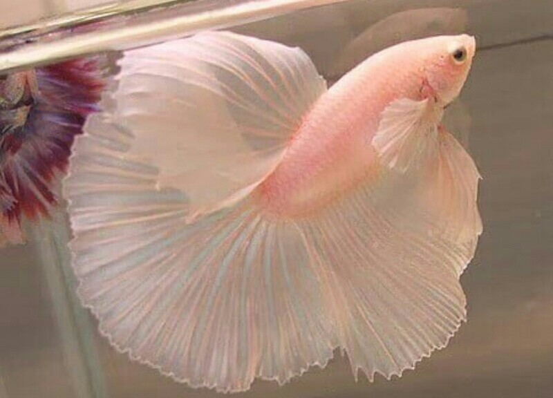 pink fish, aesthetic pastel, pastel feed and pink