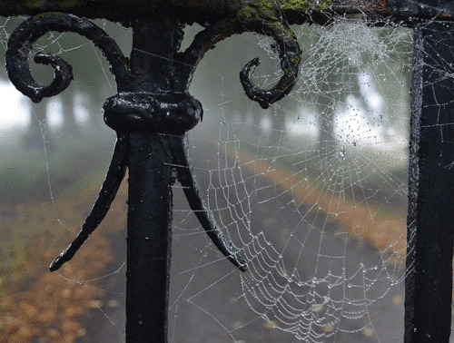 woods, spider web and travel