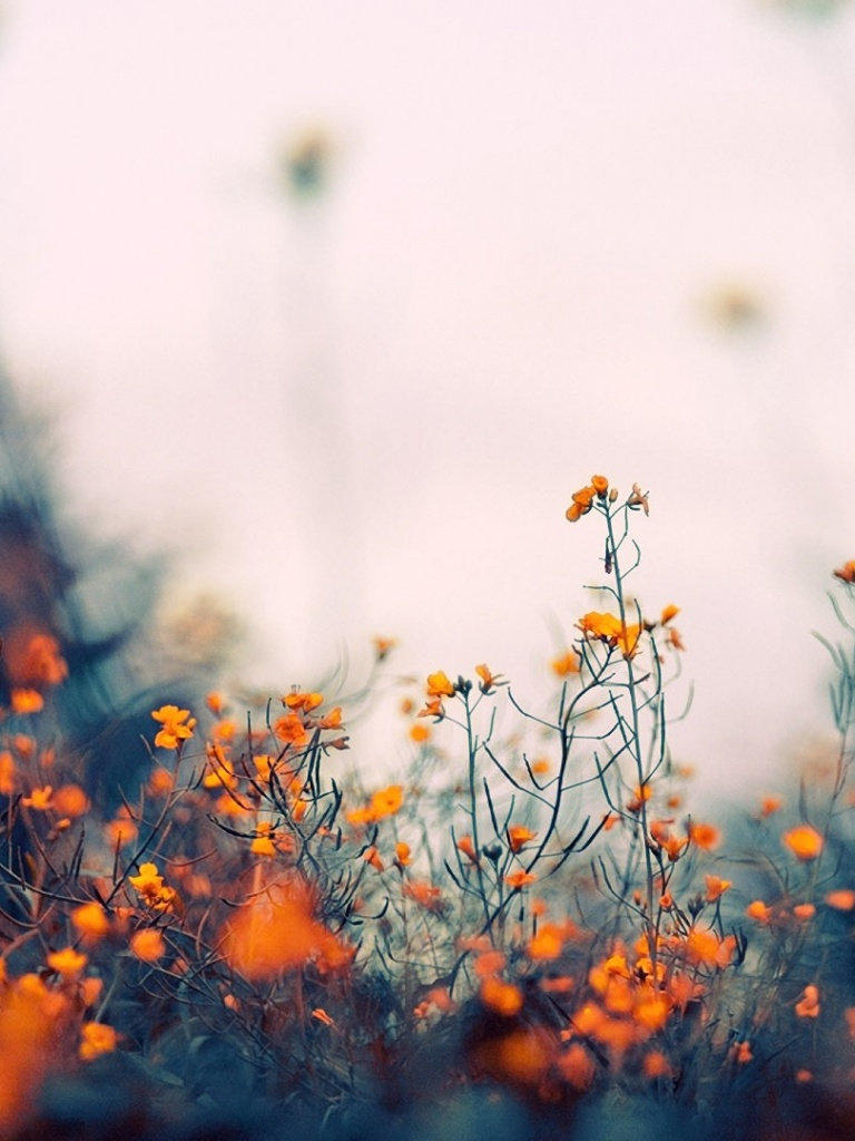 flower, nature, orange flowers background and cute flowers
