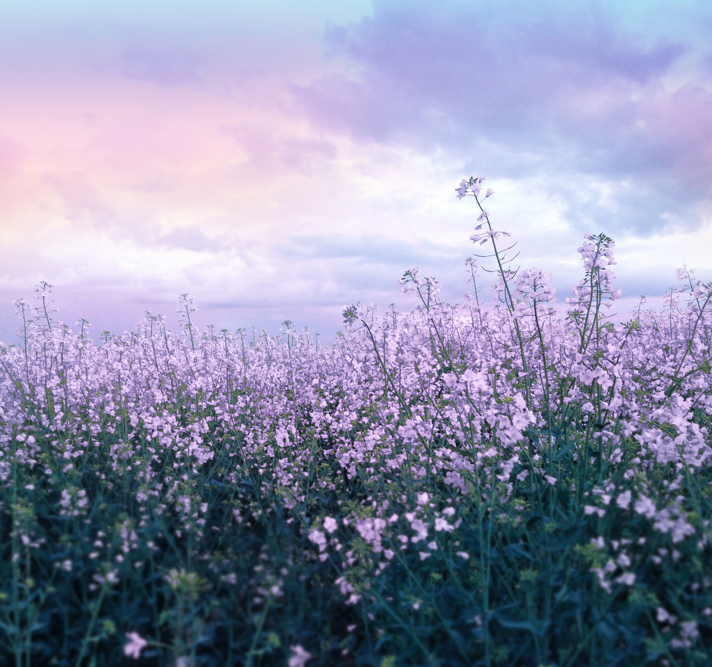 nature, wallpaper, background and flower field background