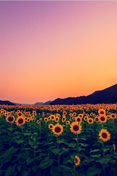 yellow, nature, sunrise and meadow
