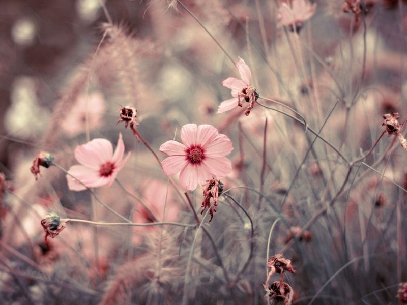 pink flowers, wallpaper, vintage flowers and floral background