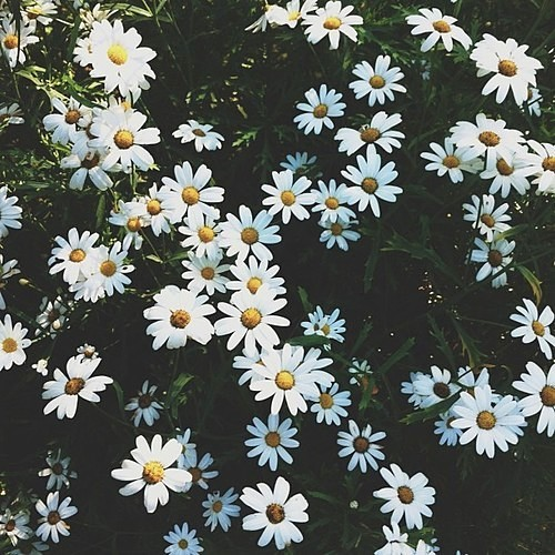 cute flowers, flower, flowers background and flowers