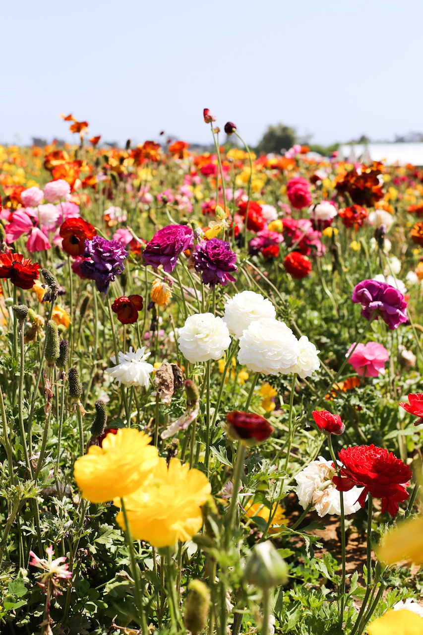 flowers, flower field, spring and flowers background