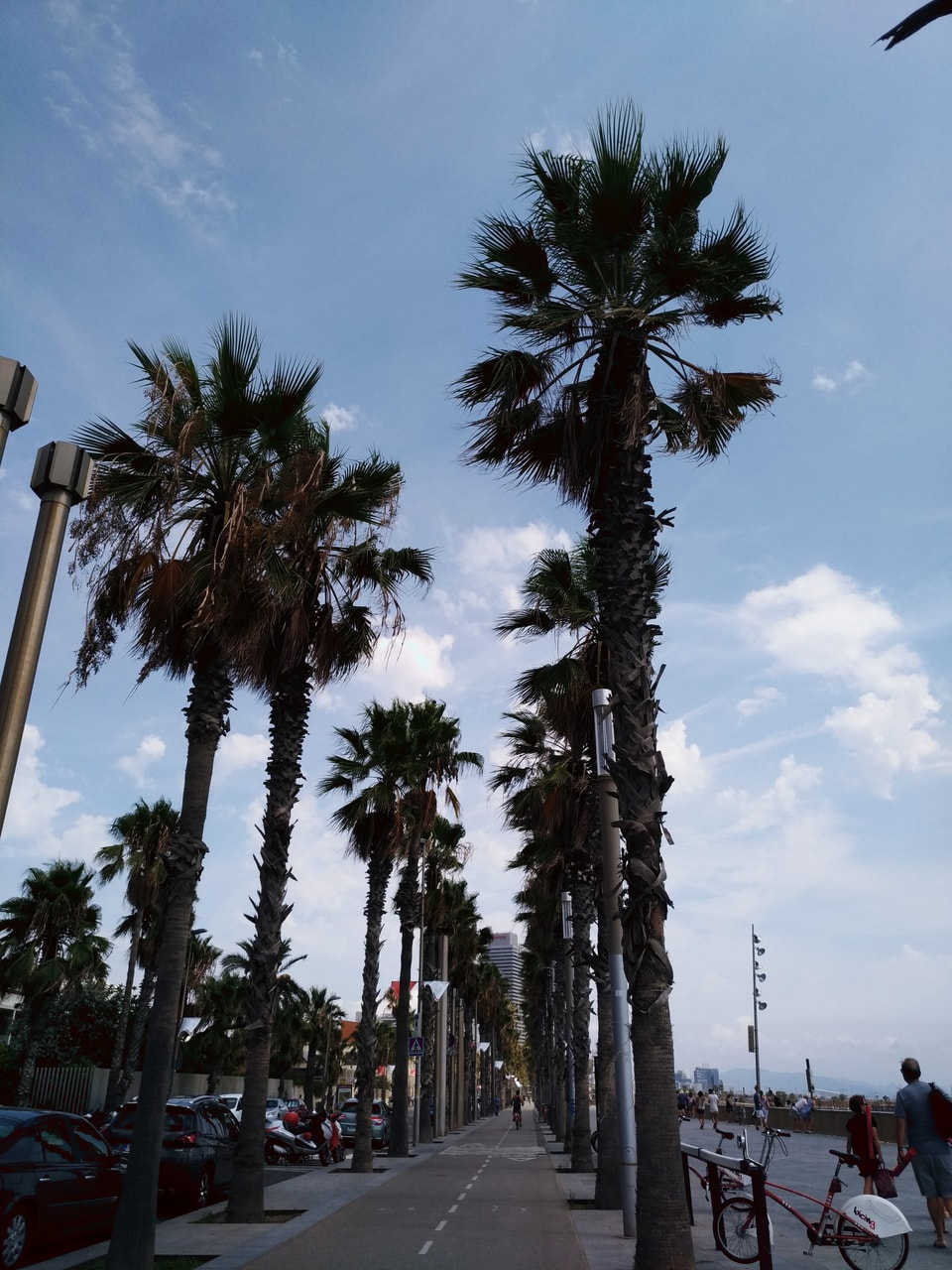 sea, sky, trees and barcellona