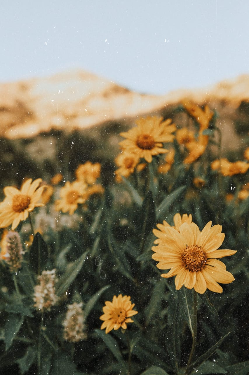 vintage, yellow, nature and flowers