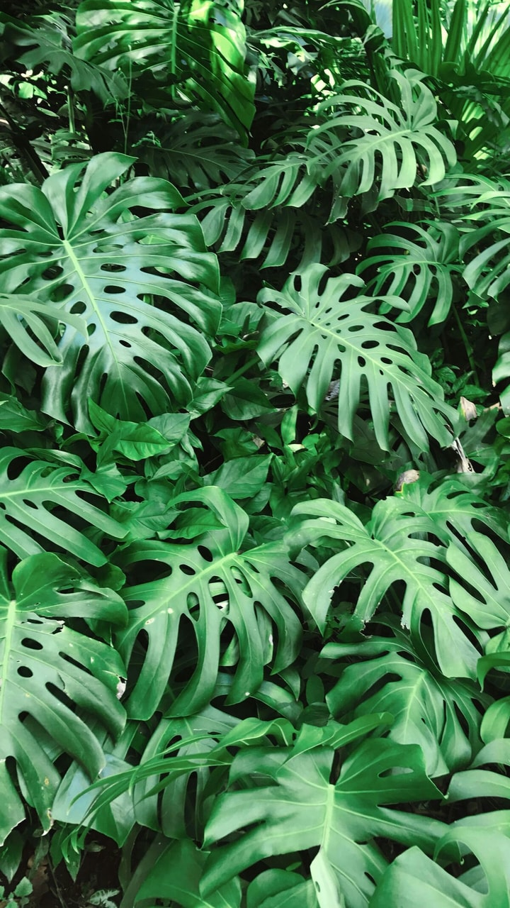Leafs Forest Aesthetics And Bushes Image 6200683 On Favim Com