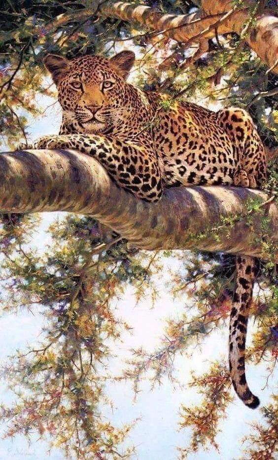 naturaleza, leopardo, felino and belleza
