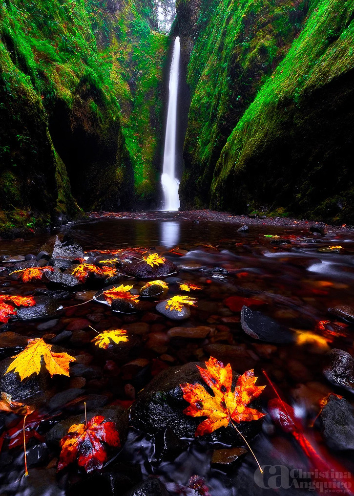 waterfall, fall and leaves