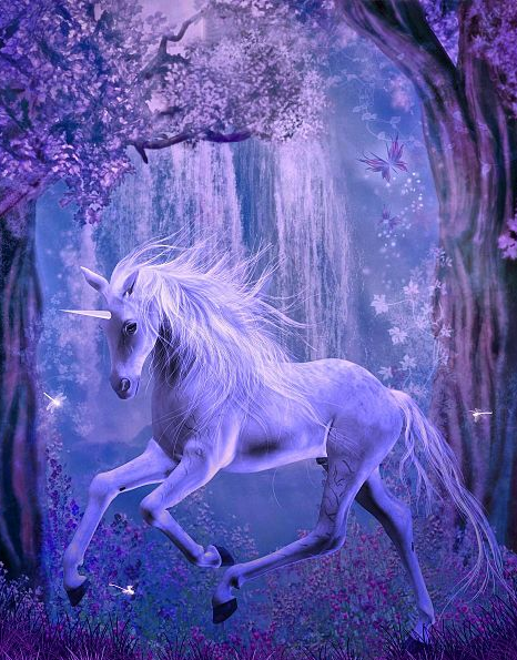 forest, nature, unicorns and beautiful