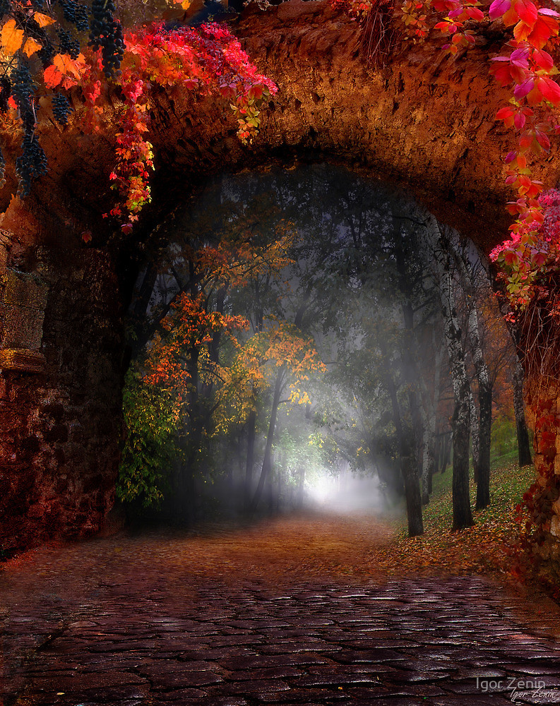 path, mist and colored leaves