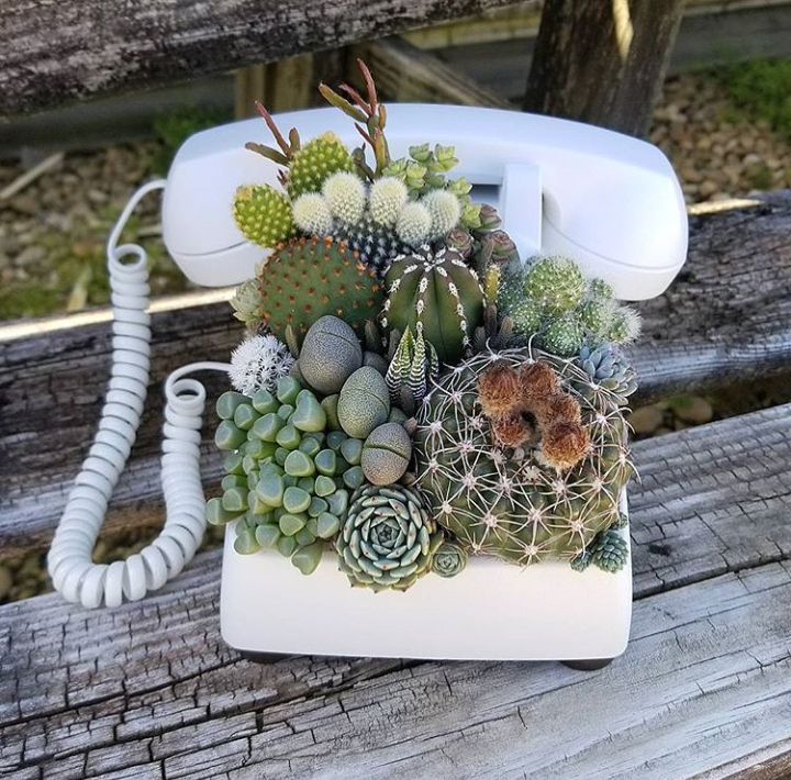 tumblr, plants, succulent and aesthetic