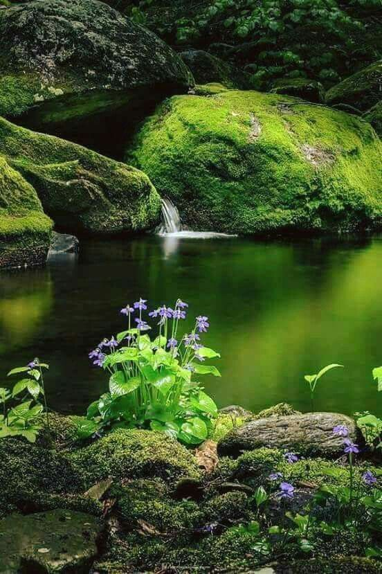 nature, pond and green