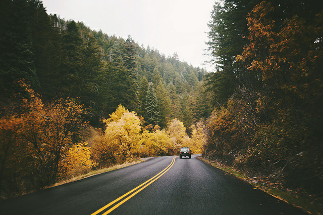 roadtrip, trip, trees and yellow
