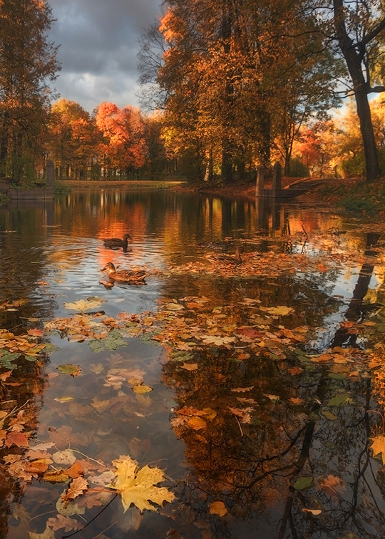 pond, fall and autumn