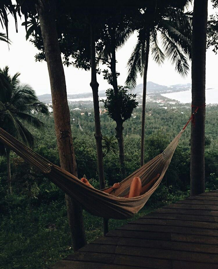 amazing view, inspiration, nature and forest