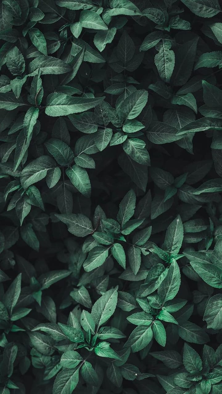 Wallpapers Aesthetic Wallpaper And Leaves Image 6272502 On Favim Com