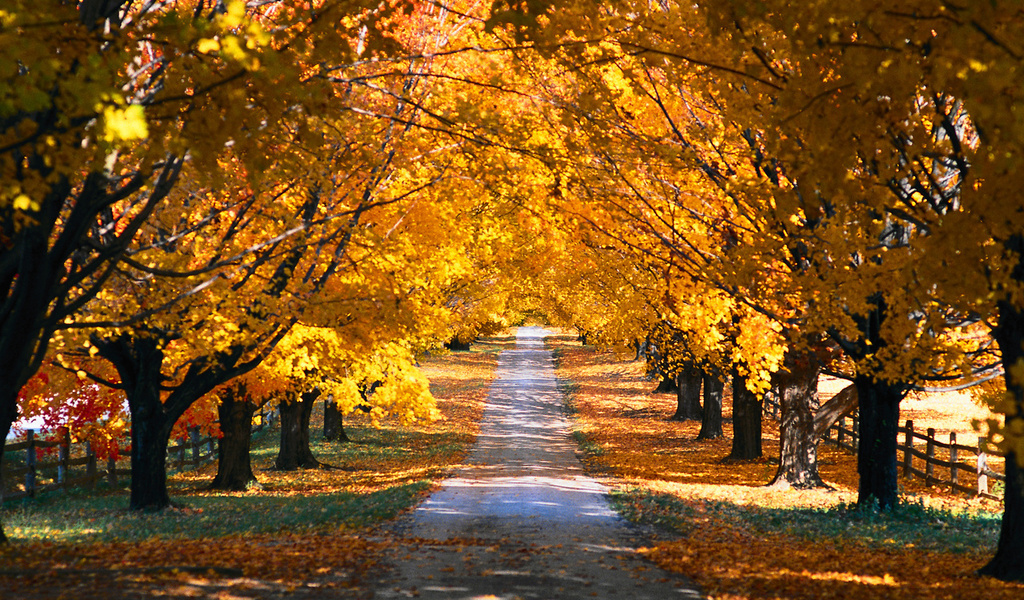 fall, autumn and yellow
