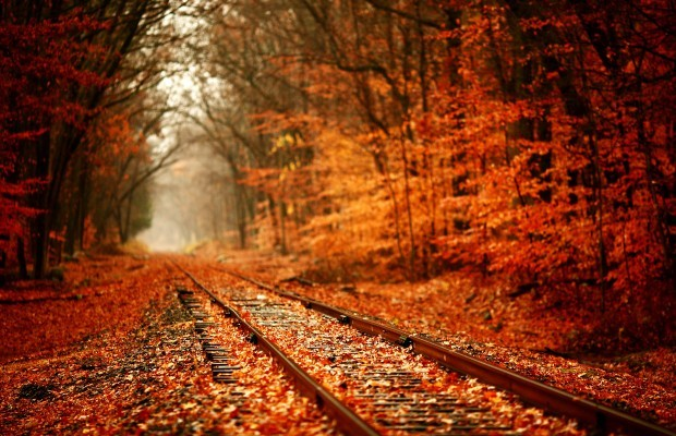 forest, autumn and leaves