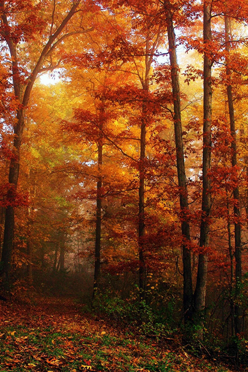 color, autumn and leaves
