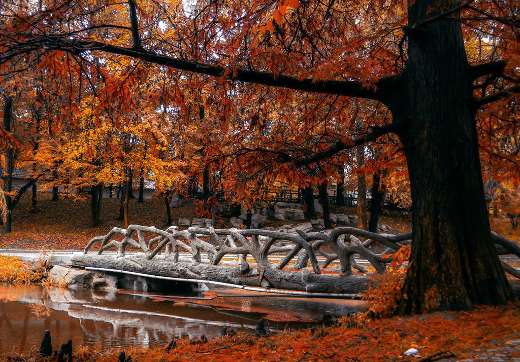 romanes park, autumn leaves and fall foliage