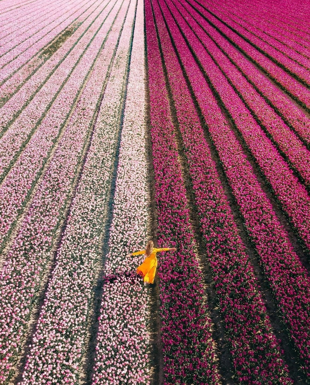 voyage, flowers field, pink and life