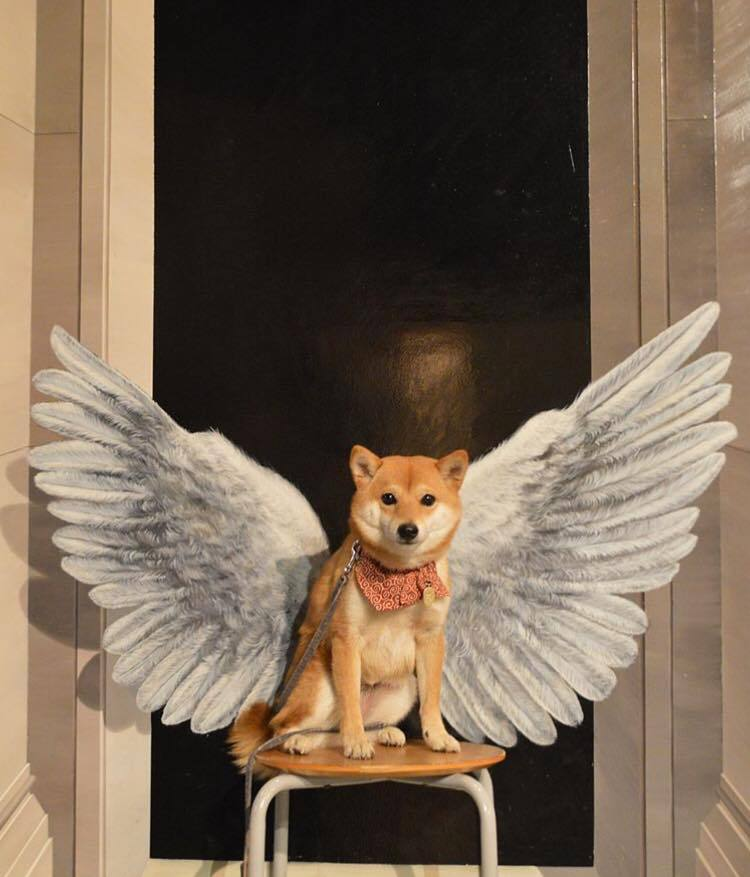 wings, dog and pale