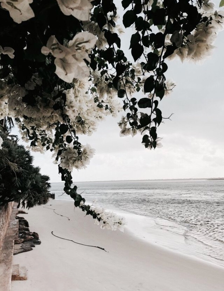 beach, wanderlust and plants