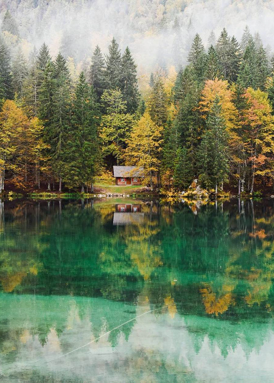 forest, italy and nature photography