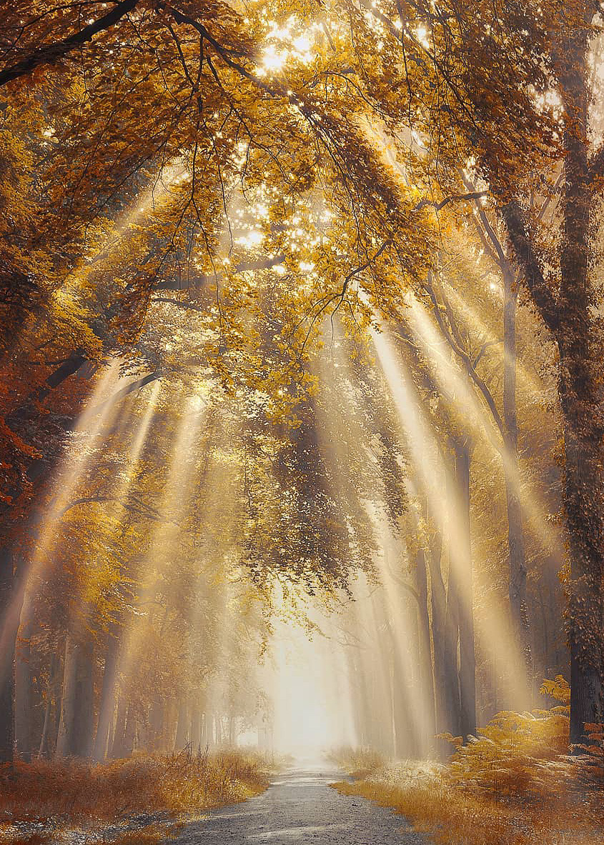 landscape photography, nature photography and fall foliage
