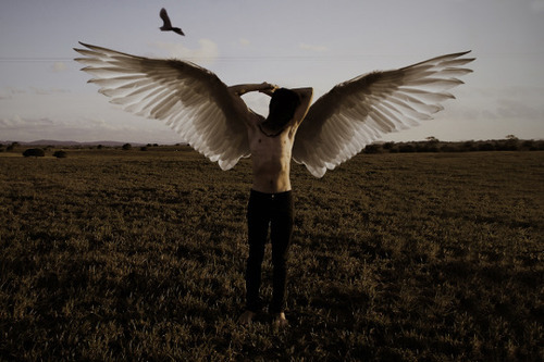 wings, paranoia and angel