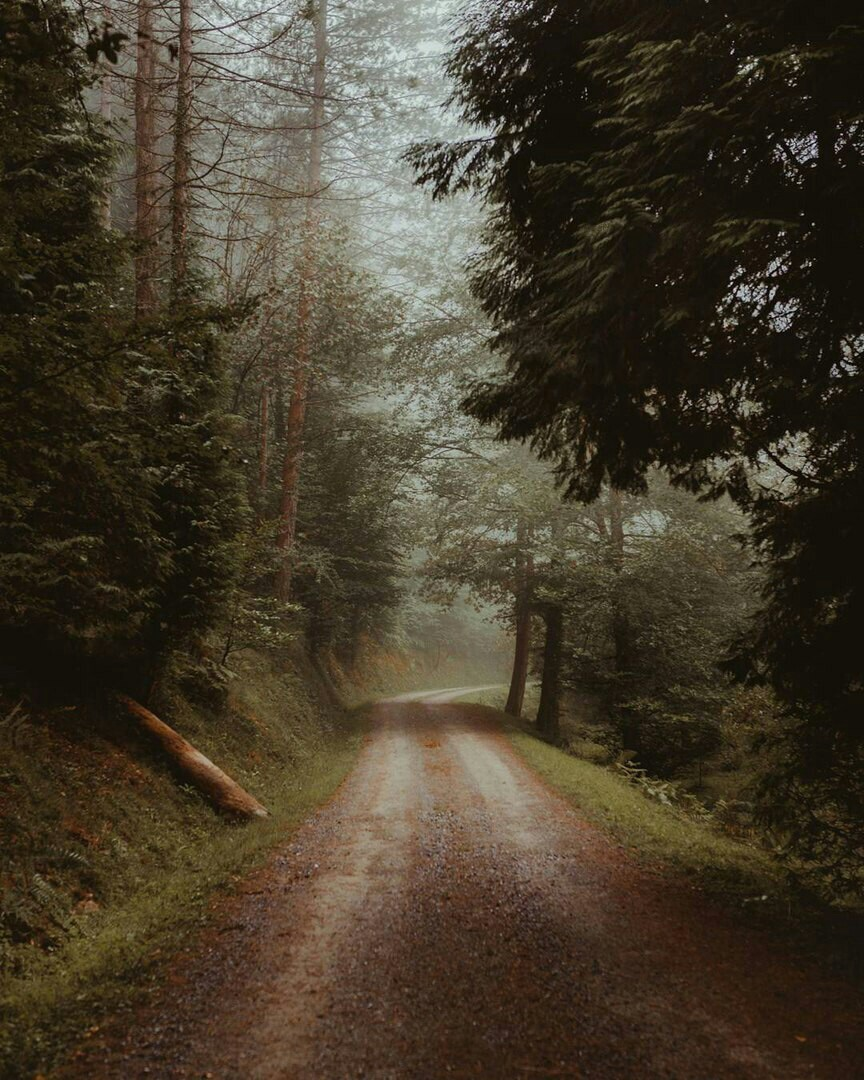 trees, path and fog