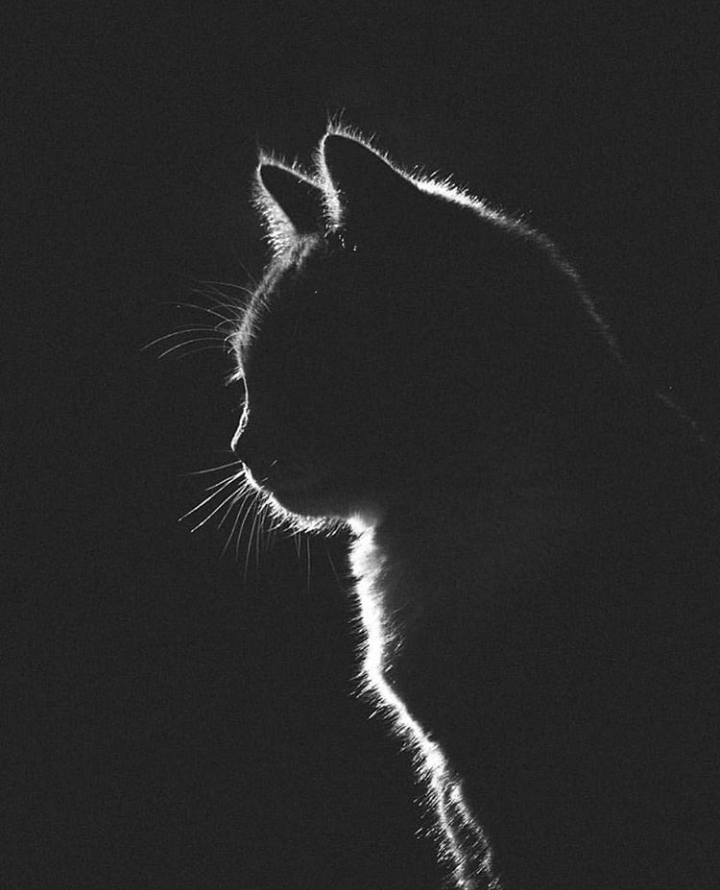 Black Cat Cat Silhouette Wallpapers And Wallpaper Image 6326159 On Favim Com