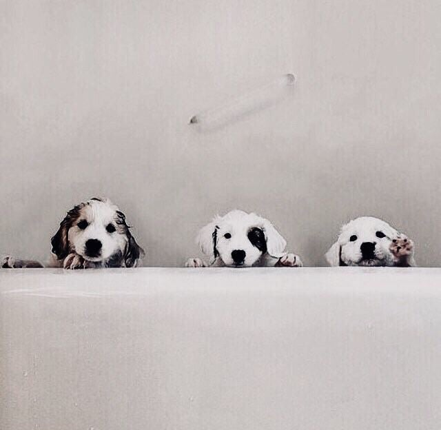 cachorros, animals, adorable and aww