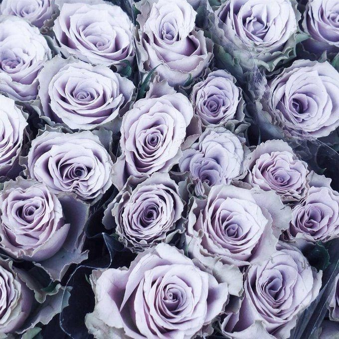 Aesthetic Beauty Wallpapers And Purple Image 6368564 On Favim Com