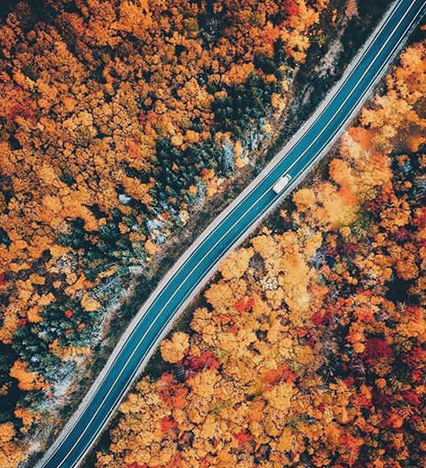 autumn, fall, trip and road