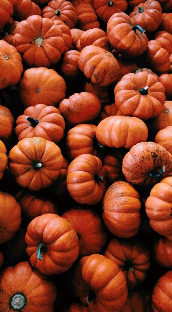 Aesthetics Pumpkin November And Wallpaper Image 6397470 On Favim Com