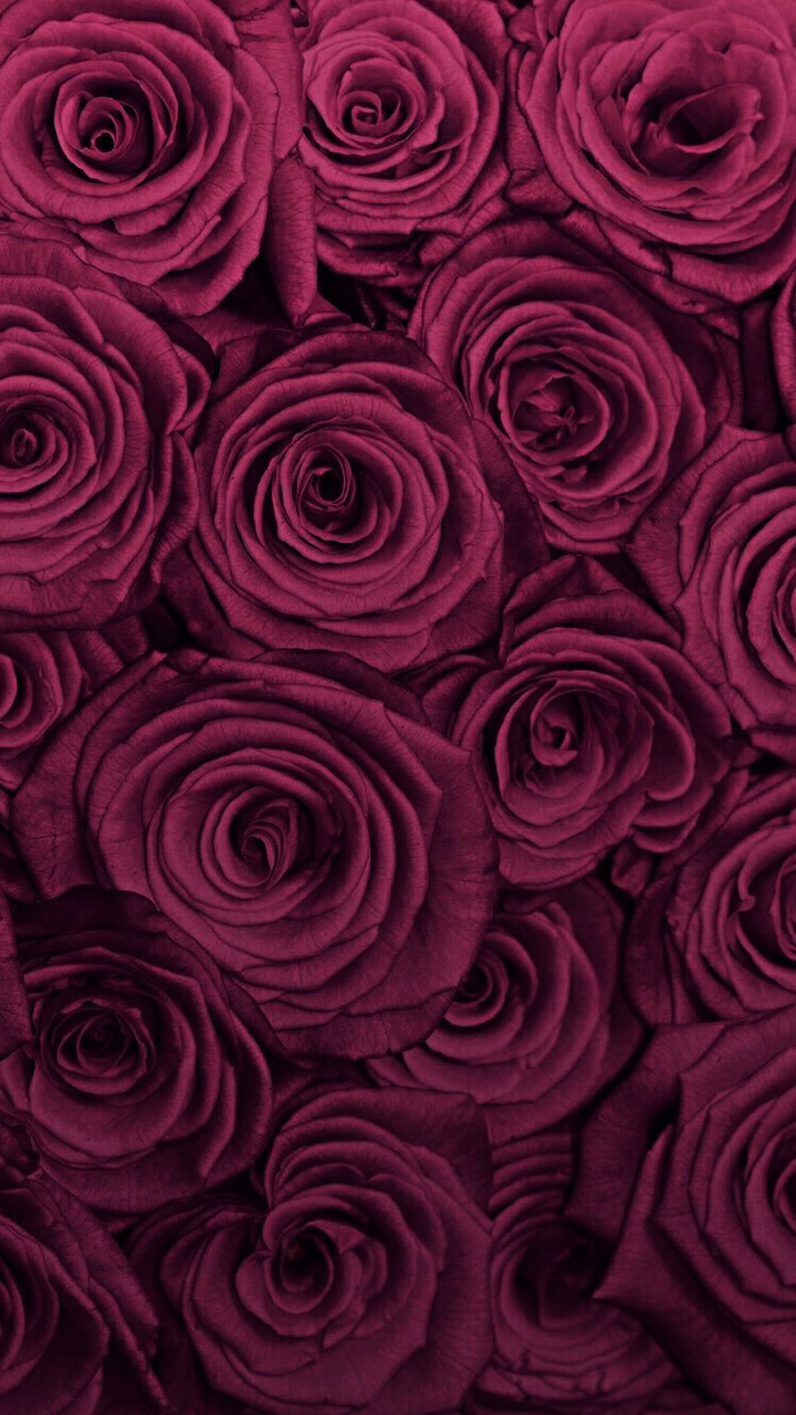 Background Burgundy Rose And Rose Wallpaper Image 6392912 On