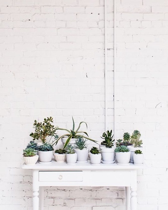 life, cacti, decoration and home decor