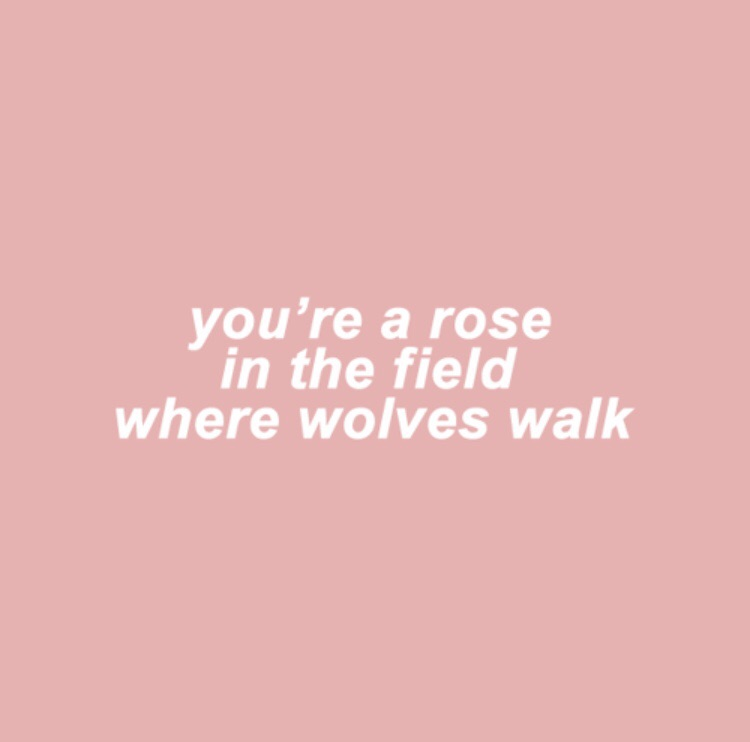 pink, field of roses, bloom and fragile