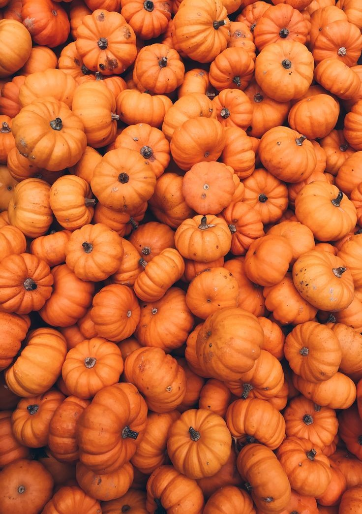 is, pumpkins and this