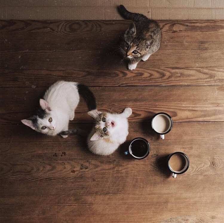 coffee, cats, cutie and lovely