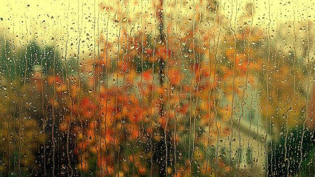 autumn, rainy day, nature and aesthetic