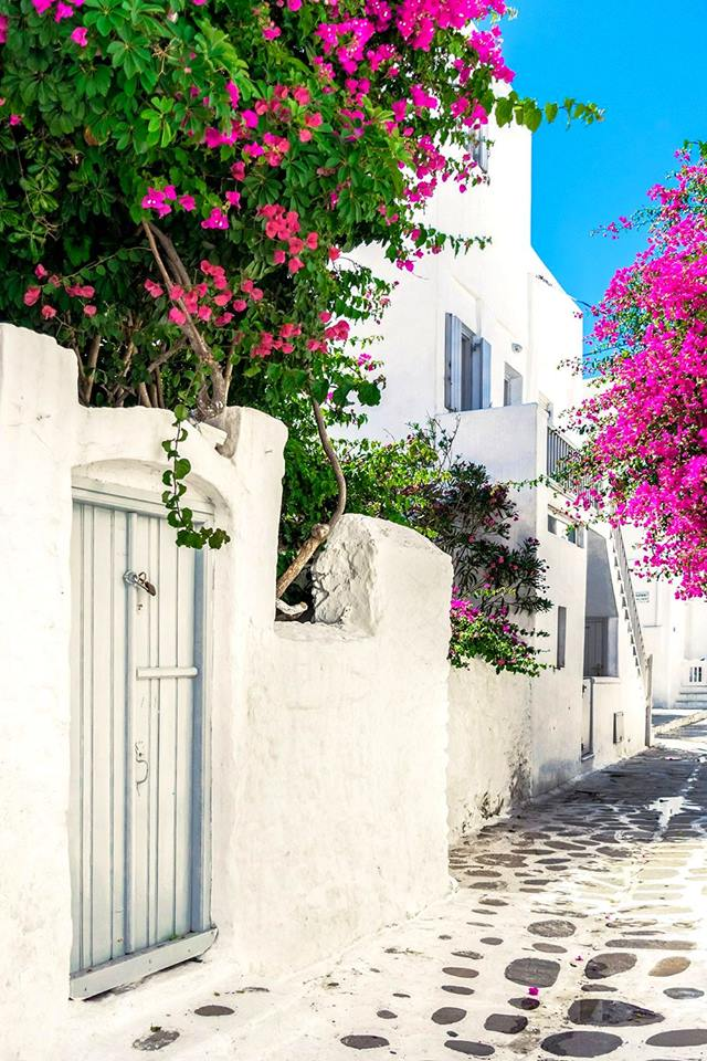 flowers, traveling, streets and travel
