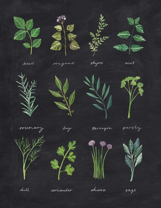 herbs, organisation and organise
