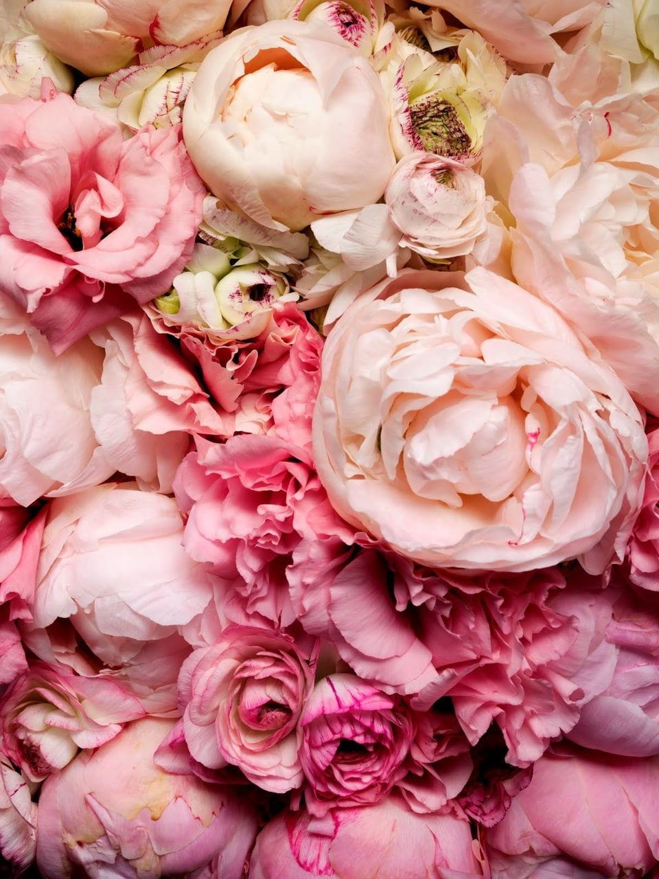 pink flower, flowers, flower and background