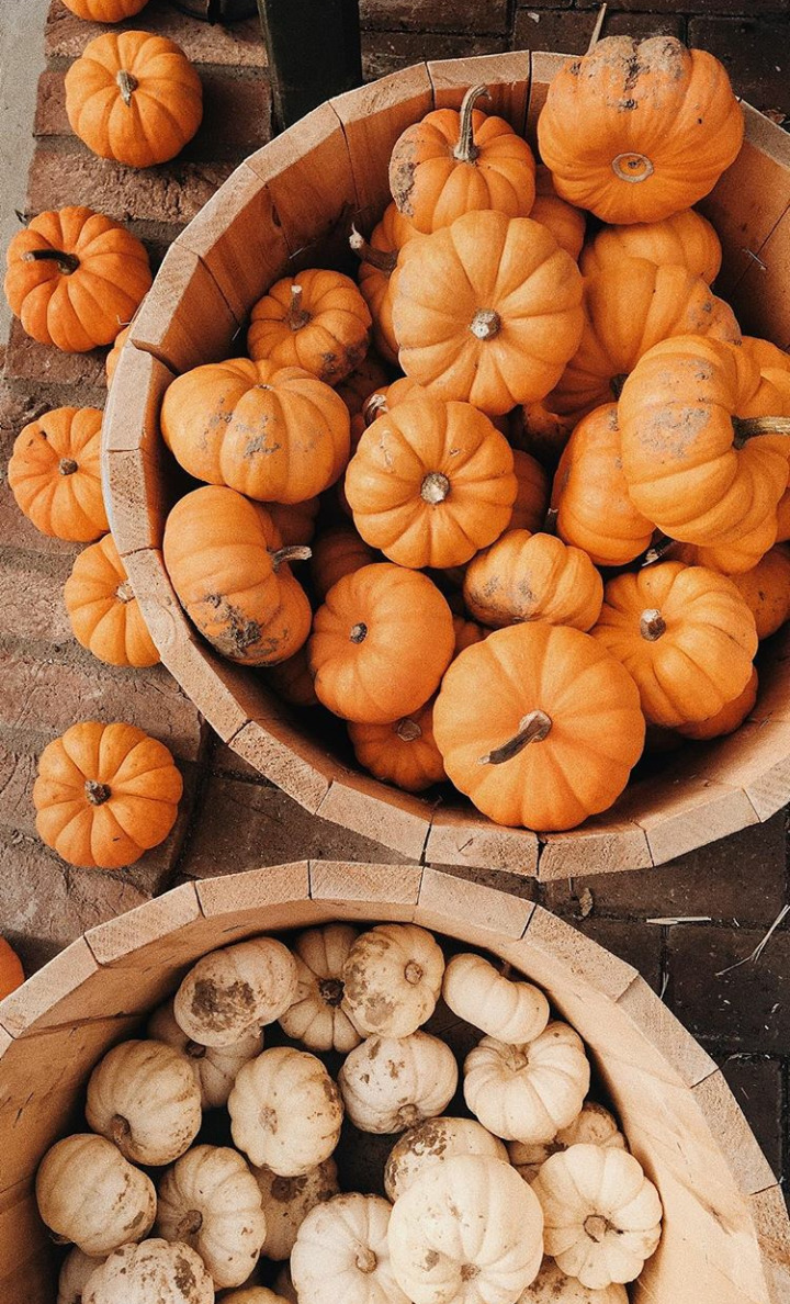 white pumpkins, upload, autumn air and autumn vibes