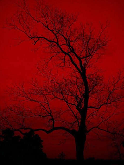 Spooky Wallpaper Red And Black Background Spooky Background And Dark Red Wallpaper Tumblr Image 6509360 On Favim Com